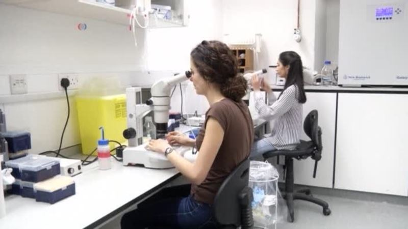 Researchers Study Early Development Through Lab-Grown Embryos