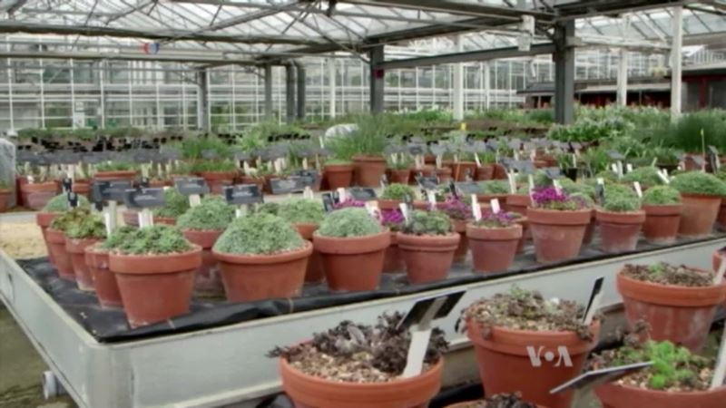 Cataloguing Traditional Medicine, One Plant at a Time