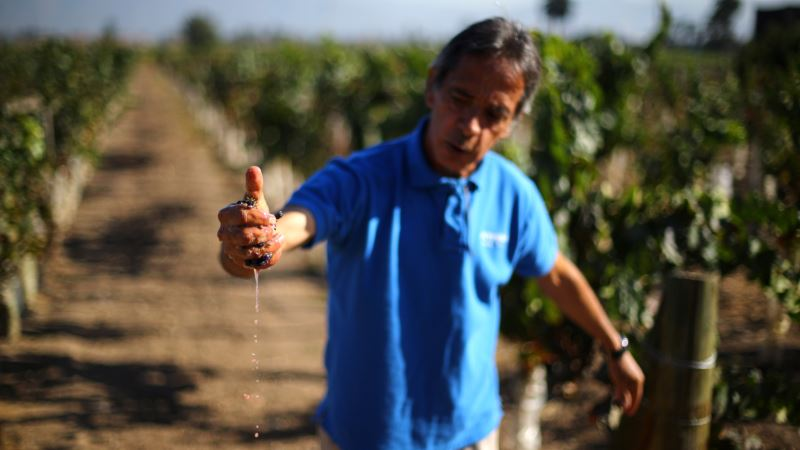 Chile's Wine Industry Sees Little Impact From Fires, Heatwave