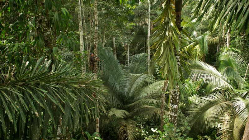 Researchers: How to Protect Peru's Rainforest? Indigenous Land Titles