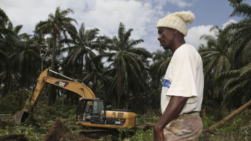 Farmers Seek Independent Inquiry into Controversial Sierra Leone Palm Oil Deal