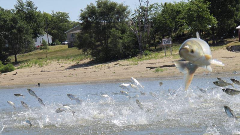 Robots, Tasers Join Battle Against Invasive Species