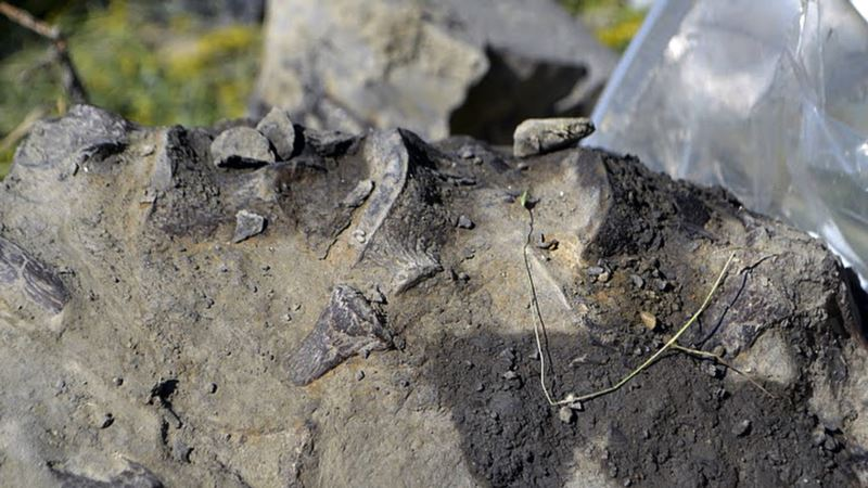 Montana Hunter's Find Leads to Discovery of Prehistoric Sea Creature