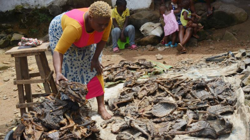 How Ebola Impacted Liberia's Appetite for Bushmeat
