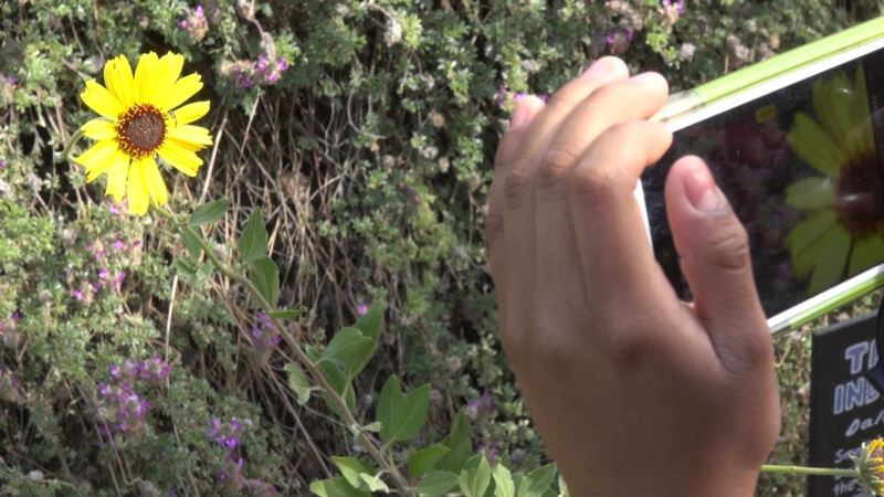 Youngsters Help Scientists Study Nature in 16 US Cities