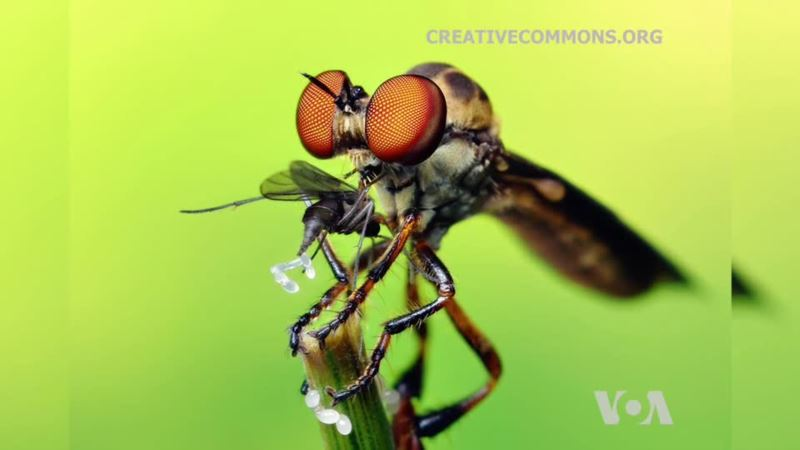 Unlocking Mysteries of a Fly's Eye