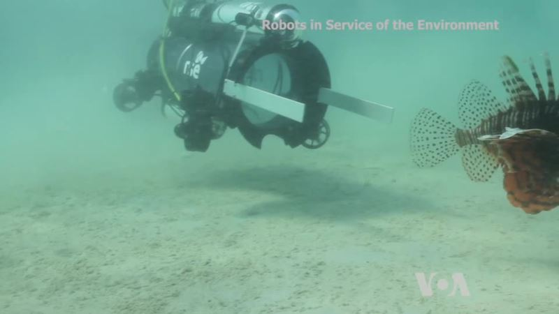 Technology: Robot Fighting Invasive Species
