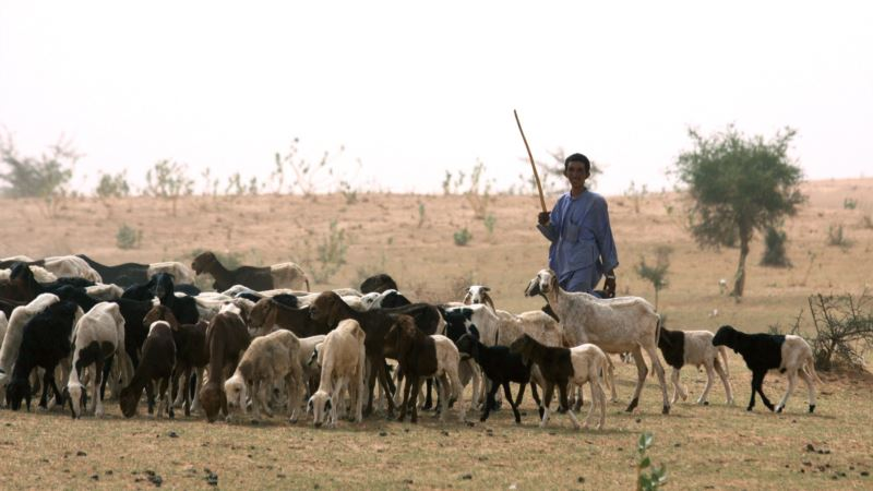 As Droughts Worsen, Phones and Radios Lead Way to Water for Niger's Herders