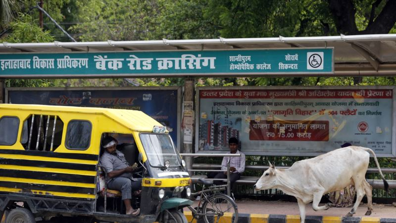 India's Limits on Selling Cattle Could Hurt Industry, Diets