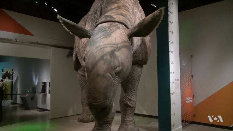 Exhibit Shows Extreme Adaptations of Mammals