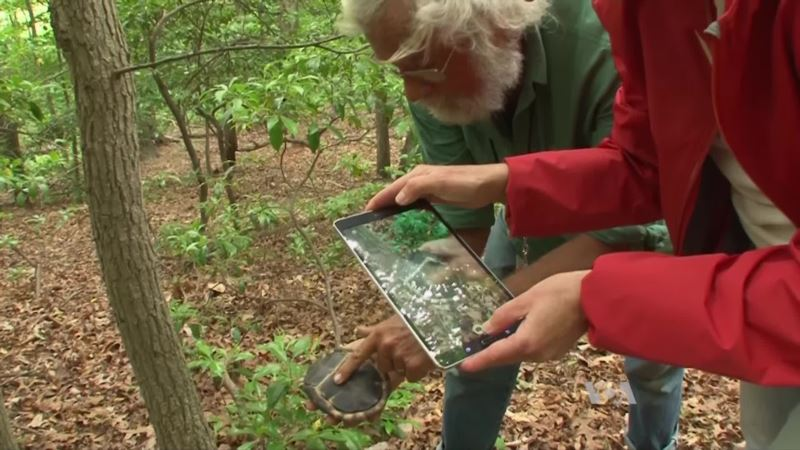 Forget Butterfly Nets; Today's Naturalists Capture Specimens on Phones