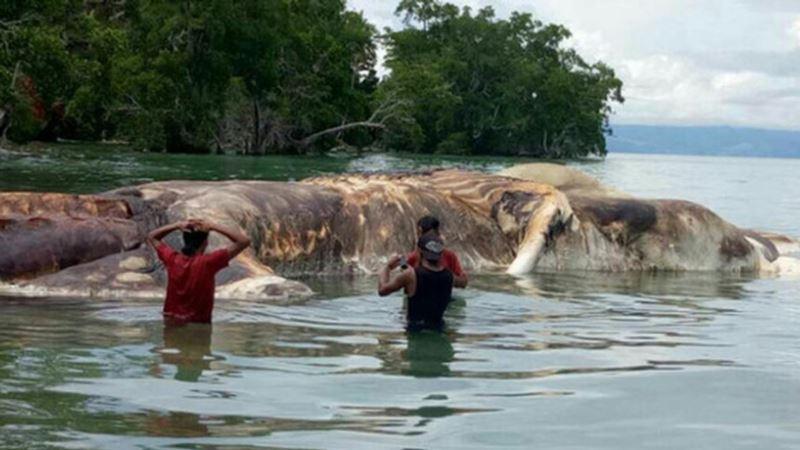 'Sea Monster' Carcass Identified