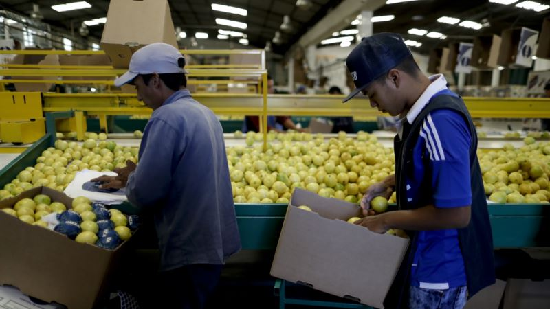 US to Allow Imports of Argentine Lemons