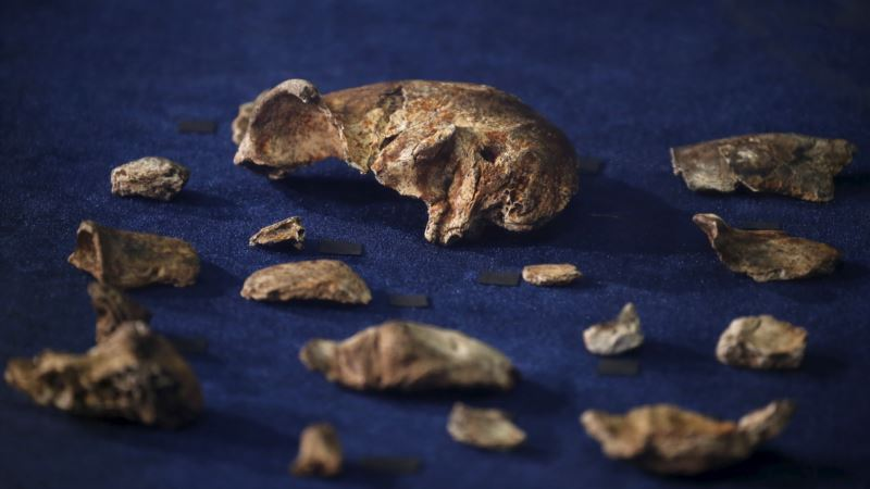 New S. Africa Fossil Discoveries Could Shift Evolutionary Theories