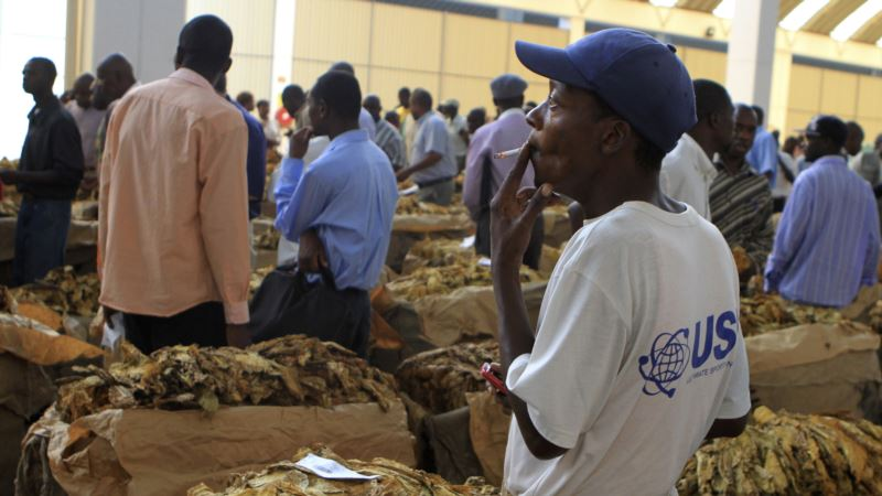Zimbabwe Tobacco is Booming, but Farmers Growing it Are Not