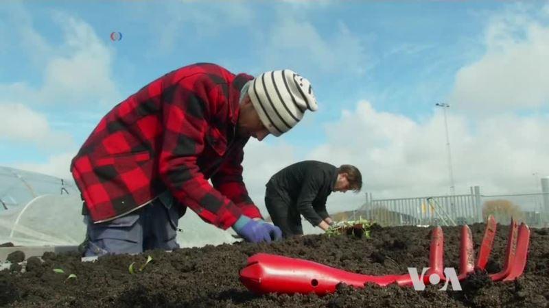 A New Occupation: Urban Farmer