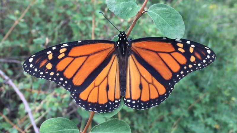 Forget Butterfly Nets; Today's Naturalists Capture Specimens on Phones.