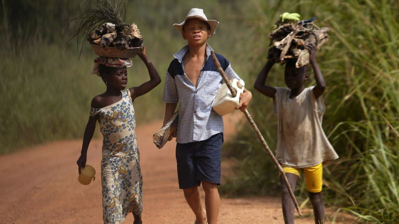 Falling Cocoa Prices Threaten Child Labor Spike in Ghana, Ivory Coast