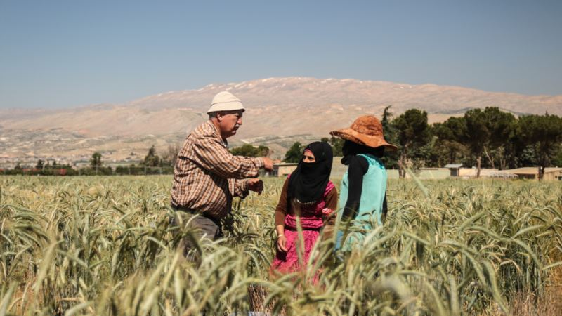 Seeds of Change Offer Hope in Lebanon