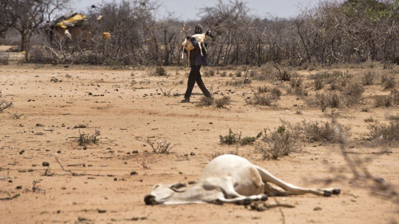UN: Early Weather Forecasts Key to Saving Lives in Drought