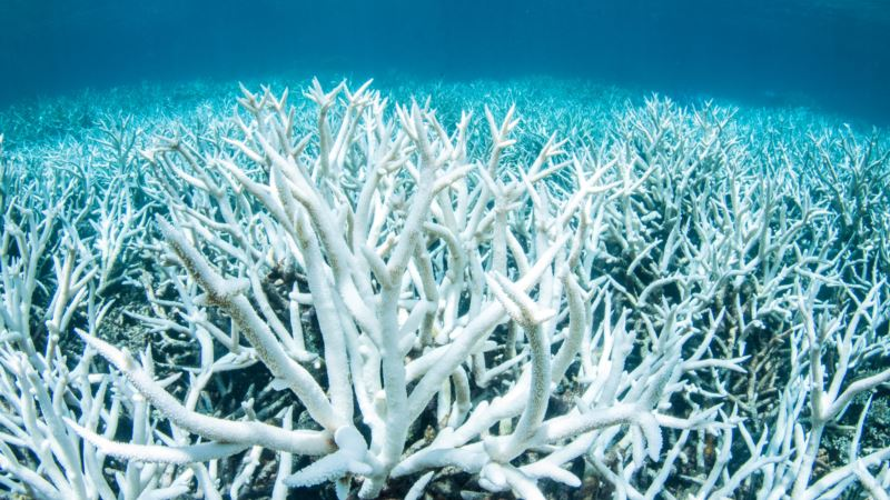 UN Puts Australia on Notice: Do More to Save Reef