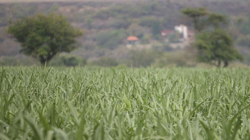 US-Mexico Sugar Trade Talks Go into Overtime