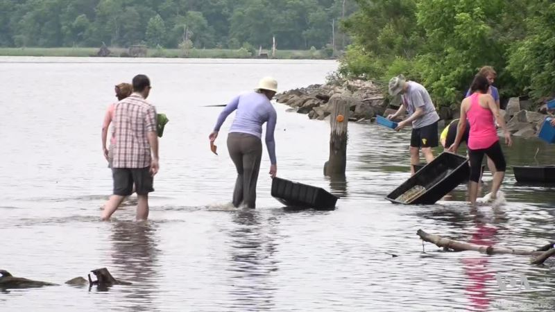 Diplomats Plant Underwater Seagrass in Potomac River to Celebrate World Environment Day