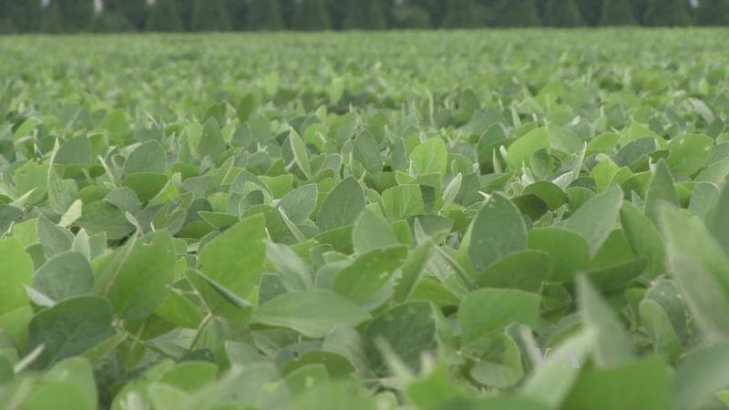 Farmers Find Healthy Soils Yield Healthy Profits