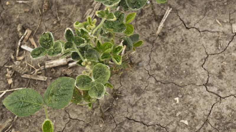 Worsening Drought Conditions in Parts of US Stressing Crops