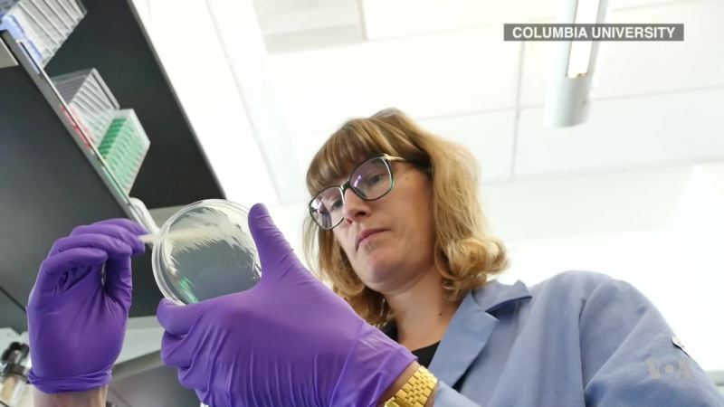 Common Baker's Yeast Used to Detect Fungal Pathogens