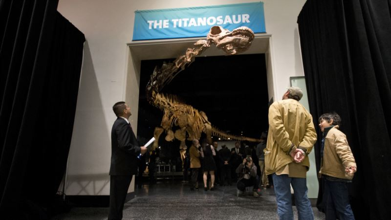 Meet the New Heavyweight Champion of Dinosaurs: Patagotitan