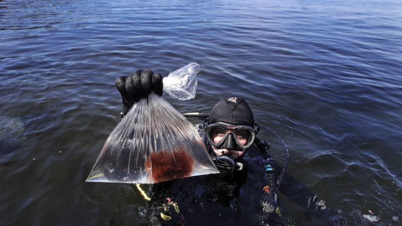 Vanishing Kelp: Warm Ocean Takes Toll on Undersea Forests