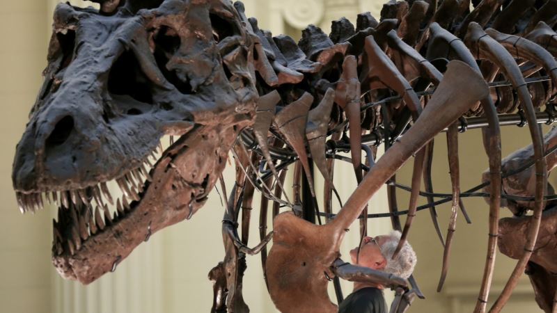 Famed T. rex 'Sue' Will Get New Look at Chicago's Field Museum