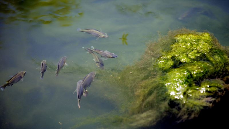 Researchers: 2017 Dead Zone in Gulf of Mexico Biggest Ever