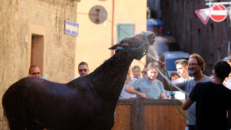 Blood, Passion Fuel Italian City's Street Horse Race