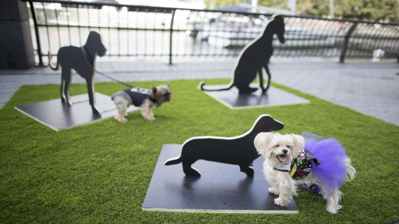 Art Exhibit Curated for Canines Opens in New York