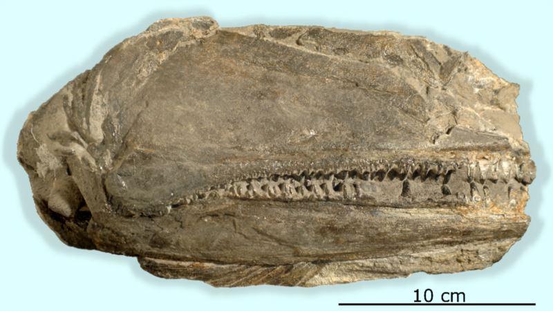 Big, Toothy Fish Found in Nevada Chomped Prey Like Sharks
