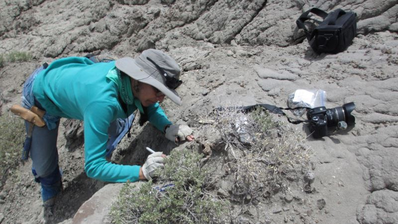 Feeling Crabby: Plant-eating Dinosaurs Snacked on Crustaceans