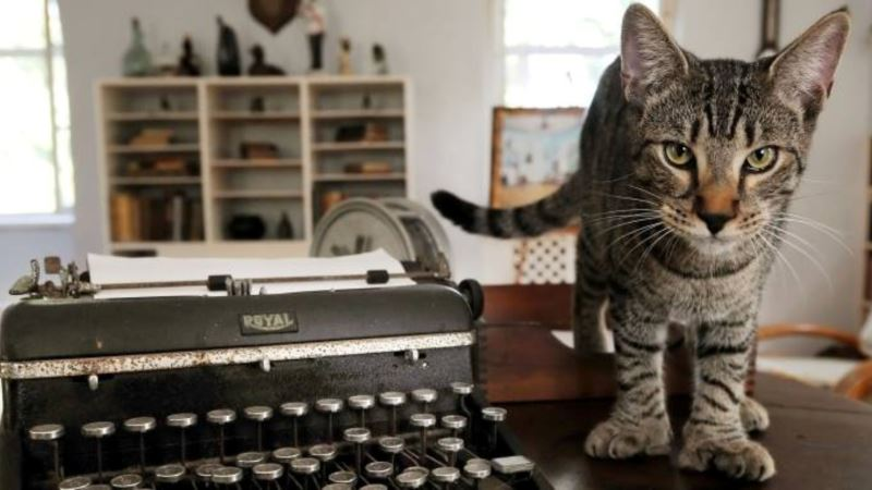 Hemingway Museum and Six-toed Cats Ride Out Irma Unscathed