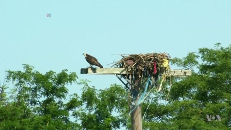 Landfill Turned Park Proves Nature's Resilience