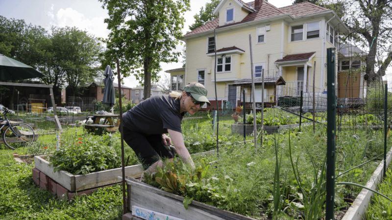 Urban Farms Provide Fresh Produce for City Residents