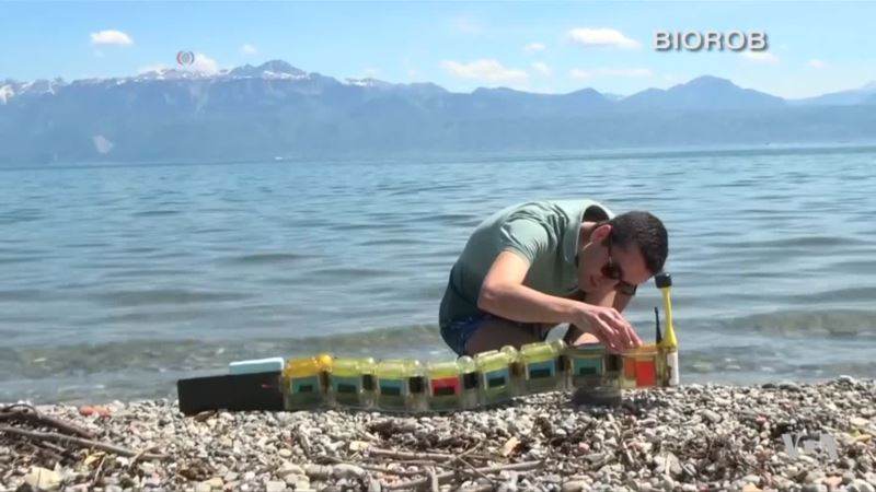 Robotic Eel Seeks Water Pollution, Aids Researchers
