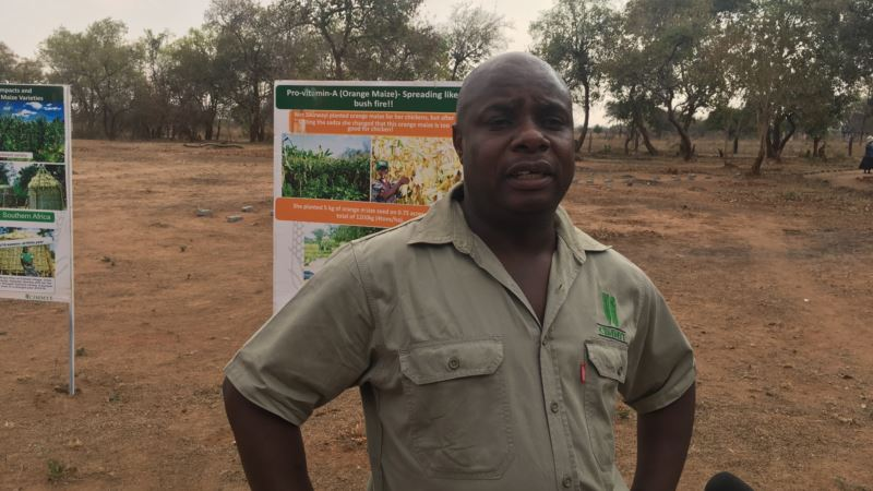 Researchers Work on Drought-tolerant Maize for Africa