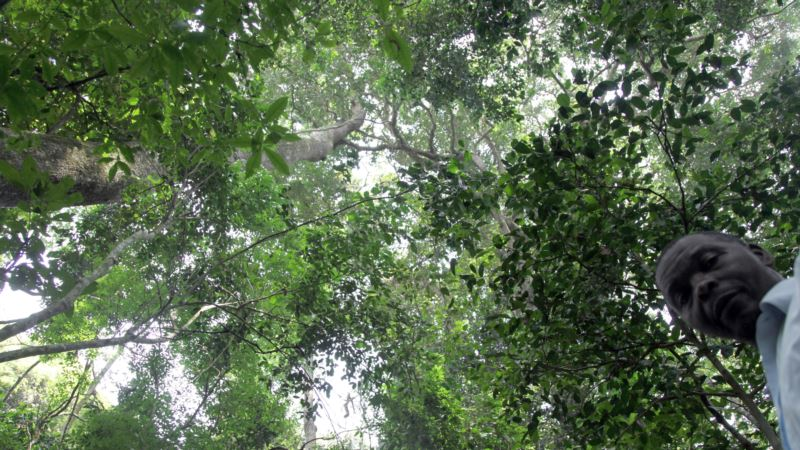 Scientists: Plant More Trees to Combat Climate Change