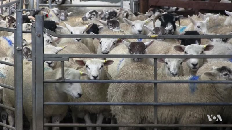 Deterring Sheep Rustlers with High Tech