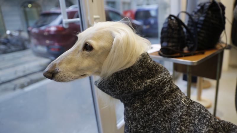 Milan Line Offers Canine Couture for Pampered Pooches