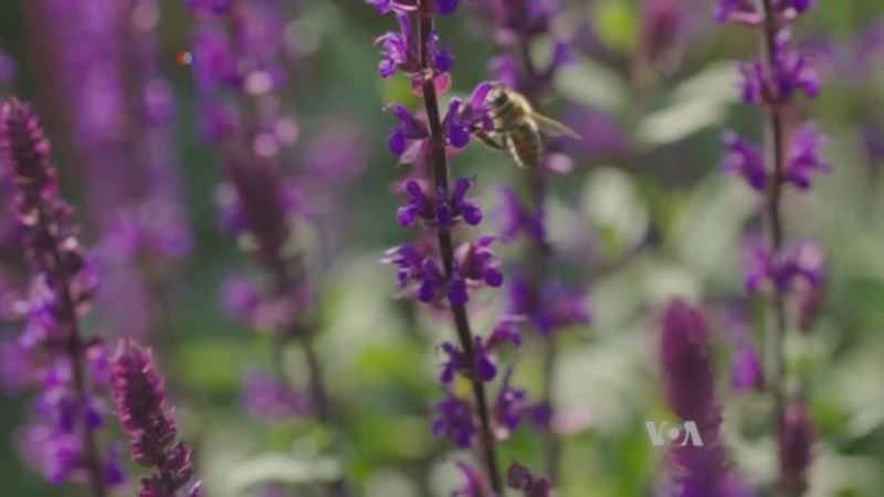 Bees Inspire Drone Researchers