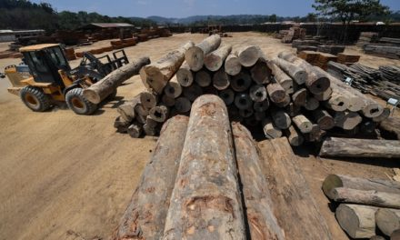 Study: 8% of Amazon Rainforest Destroyed Since 2000